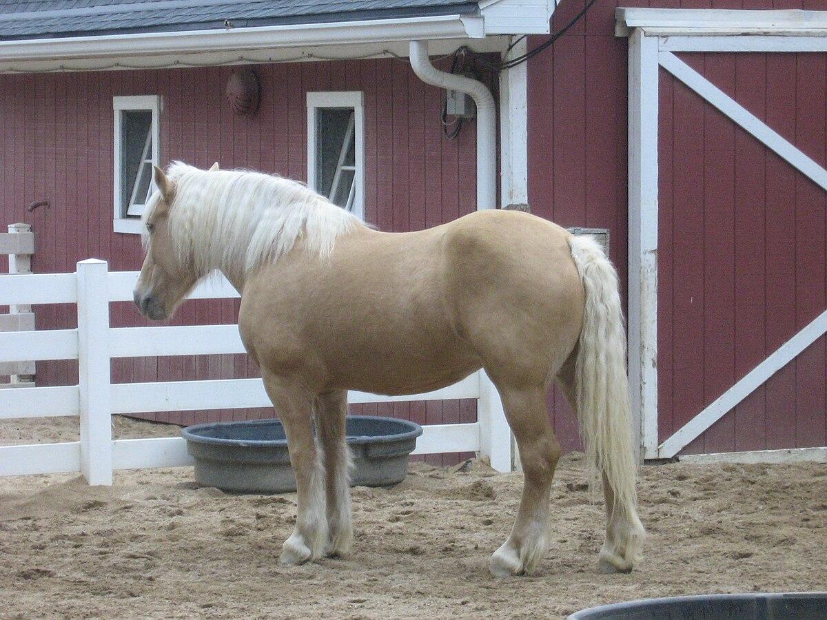 Draft Horses Wikimedia Commons