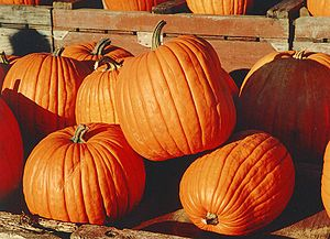Pumpkins, photographed in Canada.