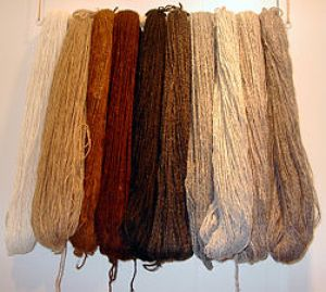 Alpaca-wool can be made into luxurious alpaca velvet