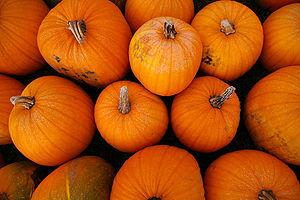 English: Pumpkins