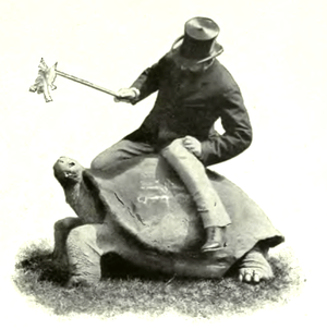 Walter Rothschild on Rotumah, a Galapagos tort...