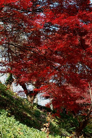 English: Fall Maples in Nara, Japan Português:...