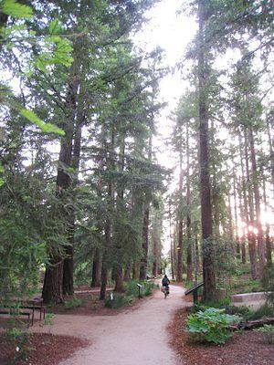 University of California at Davis arboretum, D...