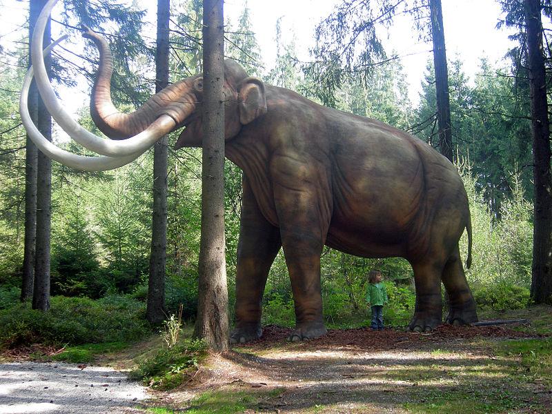 File:Mammoth Mammut model.JPG
