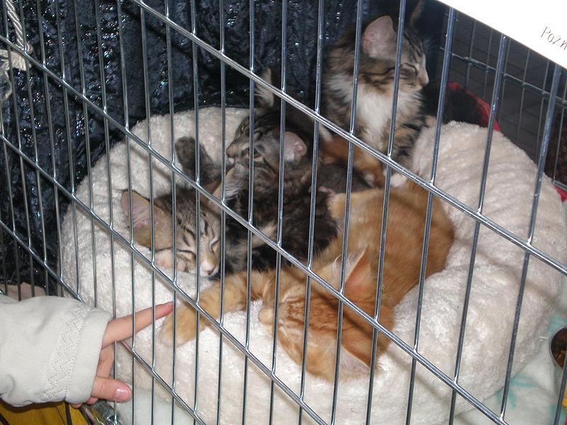 File:MTP Cat Show 2230004.JPG