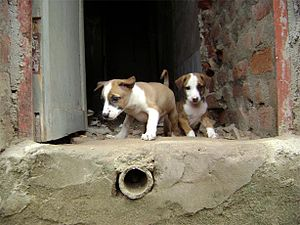 Stray puppies, I have found are as cute as pet...