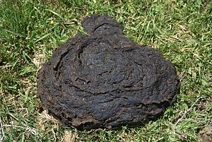 A cowpat - cow dung