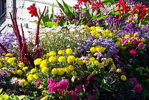 Flowers in the street in Victoria, British Col...