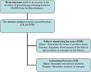 Hormones that control puberty table 08