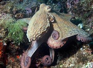 Eigentlich ganz nett: Kraken