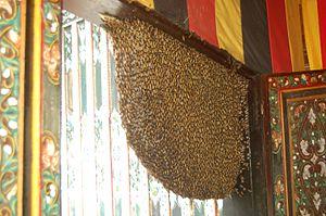 Bahasa Melayu: Sarang lebah.