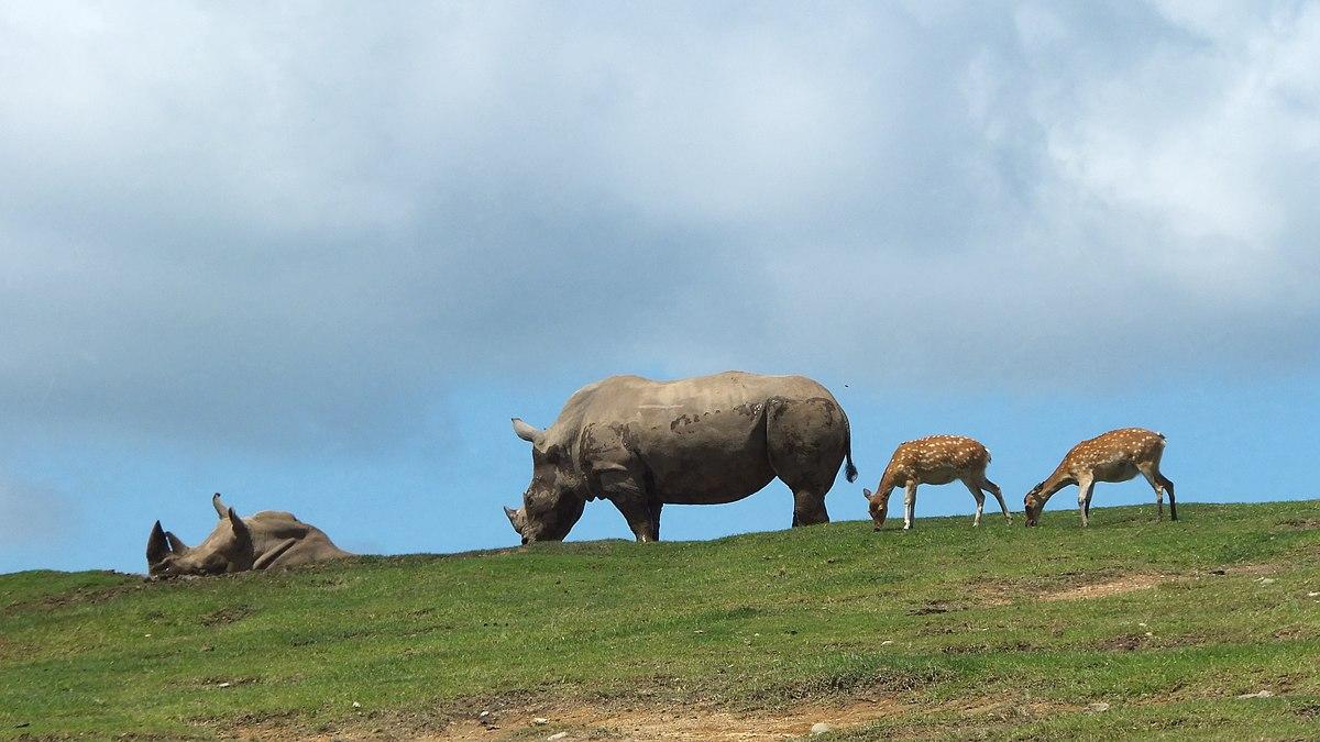 九州自然動物公園アフリカンサファリ - Wikipedia