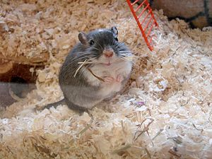 Gerbil example