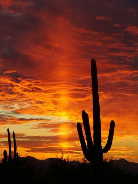 https://i2.wp.com/upload.wikimedia.org/wikipedia/commons/thumb/a/a1/Sunset_in_Saguaro_National_Park.JPG/450px-Sunset_in_Saguaro_National_Park.JPG