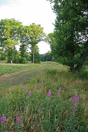 English: Willowherb And Friday Wood The edge o...