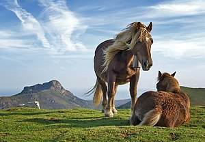 Horses on Bianditz mountain, in Navarre, Spain...