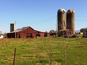 English: Tobacco barn and silos at the Broyles...
