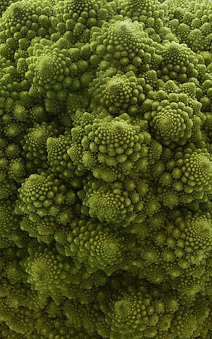 Romanesco broccoli or fractal broccoli is an e...