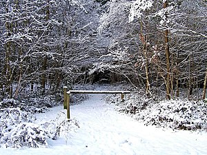English: A snow covered path at Hawkbatch, Wyr...