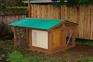 A permanent backyard chicken coop