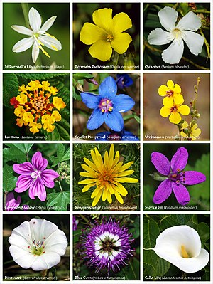 A poster with twelve species of flowers or clu...