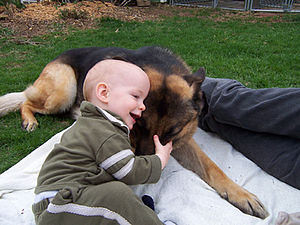 GSD with baby
