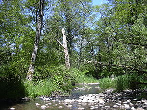 A shallow stream, perhaps 10 feet (3 meters) wide, flows over rocks through a wooded area.