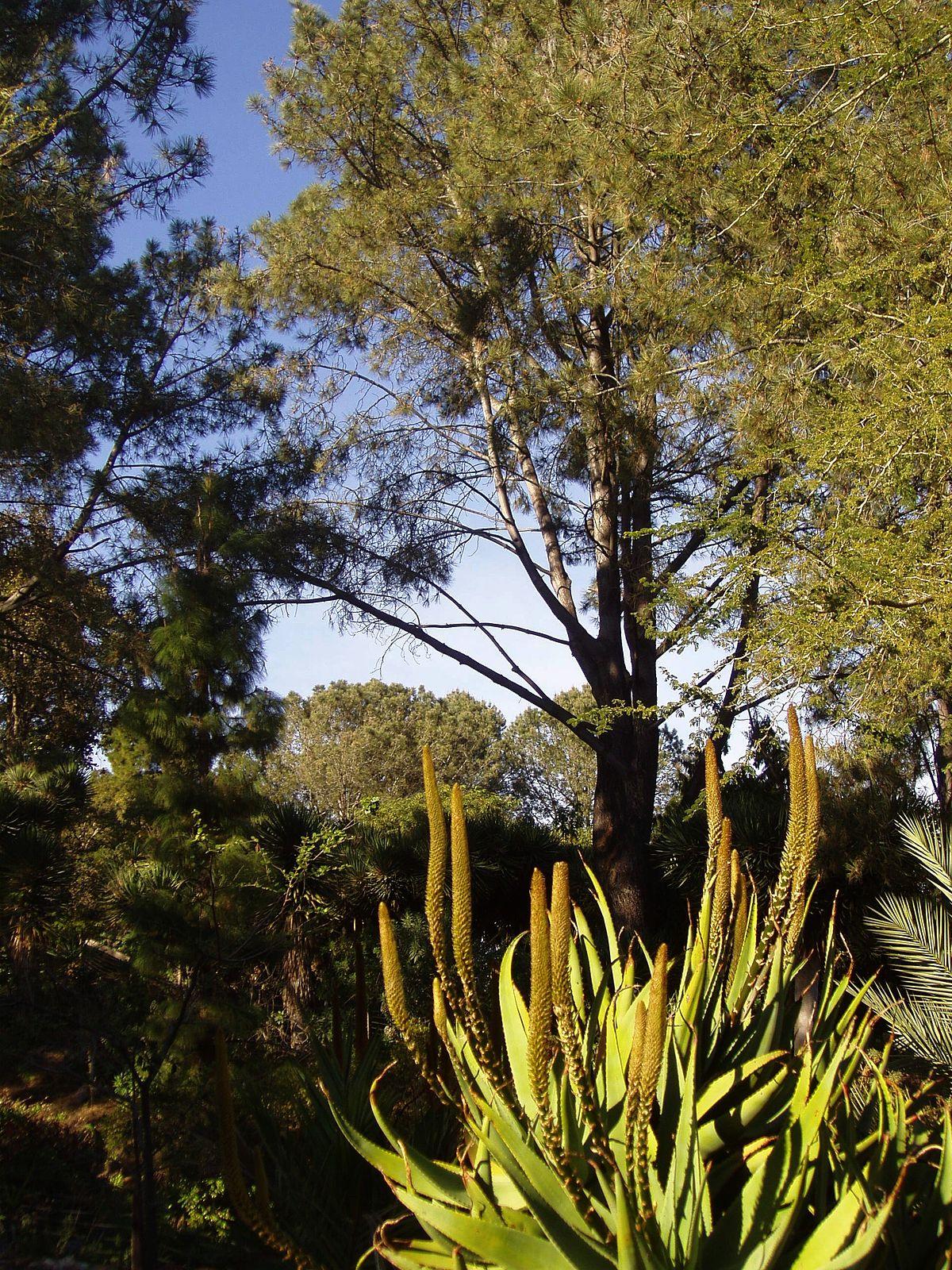 San Diego Botanic Garden Wikipedia