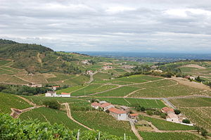 Vineyards in the Beaujolais wine region taken ...