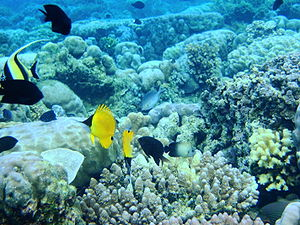 Bunaken National Marine Park, Manado, Indonesia