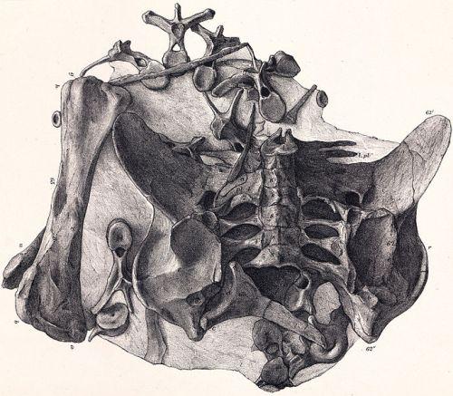 File:Dacentrurus holotype.jpg
