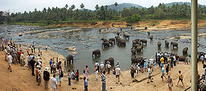 Tourist attraction: elephants in the water at ...