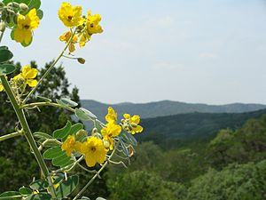 Texas Hill Country, west of San Antonio