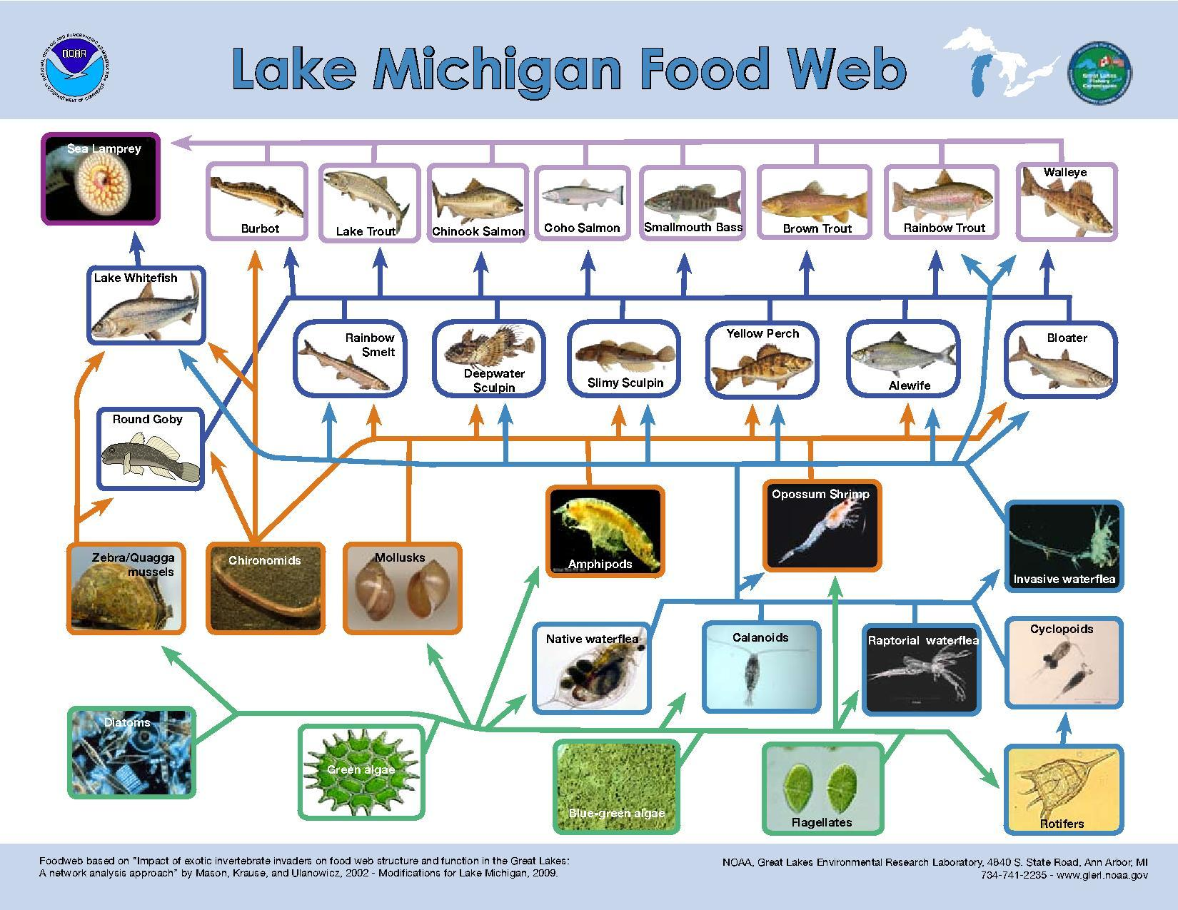 File Lake Michigan Food Web