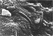 Microstructures in ALH84001 claimed to be of biogenic origin