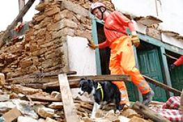 Search and rescue dog after Nepal Earthquake
