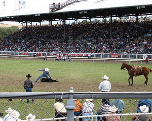 Steer roping as part of the Pendleton Round-Up.