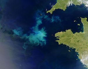 An algal bloom. The relative importance of lan...