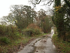 English: Road to Staple Park Farm Several lane...