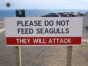 Warning Sign Phillip Island Victoria