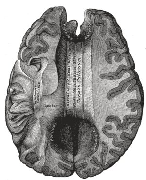 List of images in Gray's Anatomy: IX. Neurology