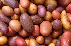 English: Different potato varieties. – The pot...