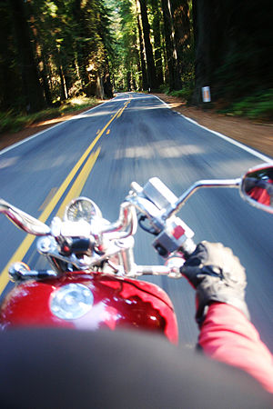 Rider's view in Avenue of the Giants, California.