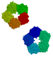 :en:C-reactive protein drawn from {{PDB|1GNH}}...