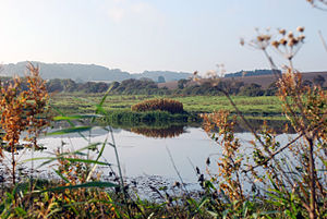 English: Kelling Water Meadow off Meadow Lane