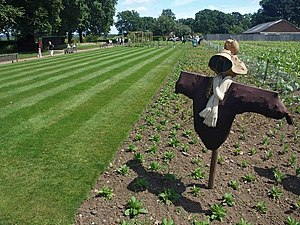 English: No so scary crows! At the RHS Gardens...