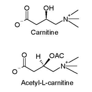 Carnitine and acetyl-L-carnitine