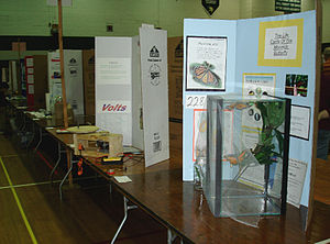 Science fair exhibit (butterflies), probably t...