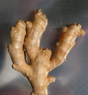 The root of Zingiber officinale.