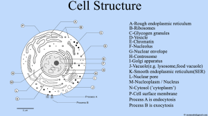 File:Cell Structure , Cell Diagrampng  Wikimedia Commons